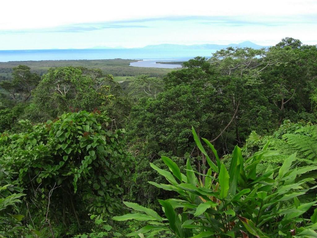Dünyadaki En Güzel 10 Orman: Avustralya'da Daintree Yağmur Ormanı