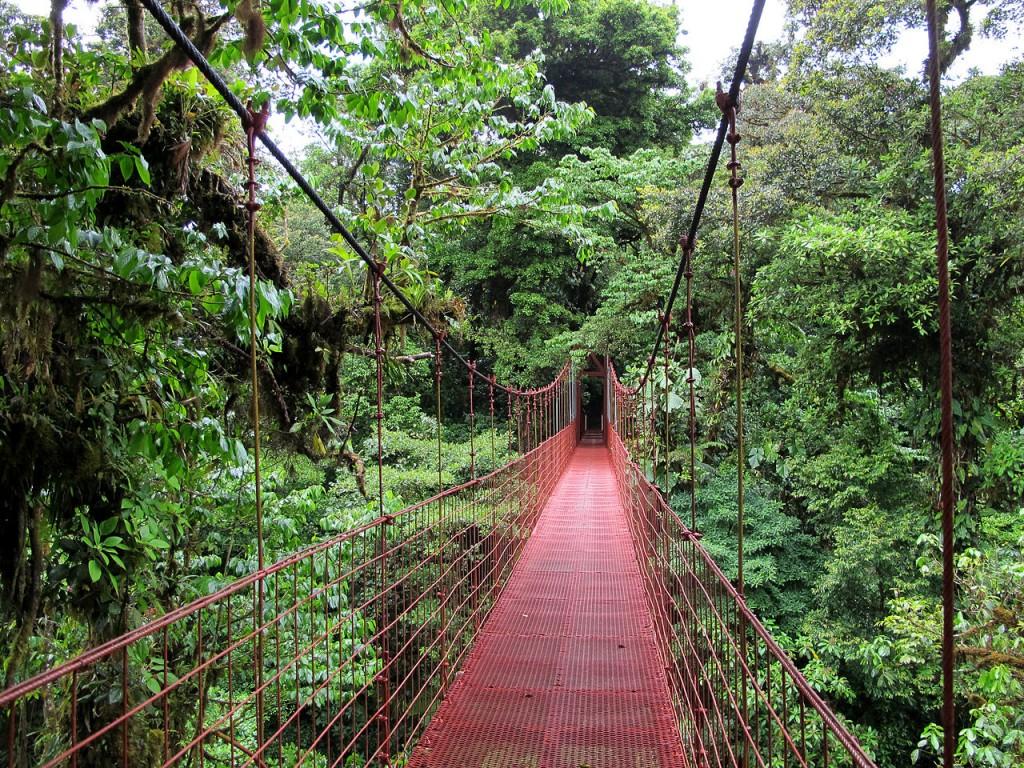 Monteverde Cloud Forest Reserve, Kosta Rika