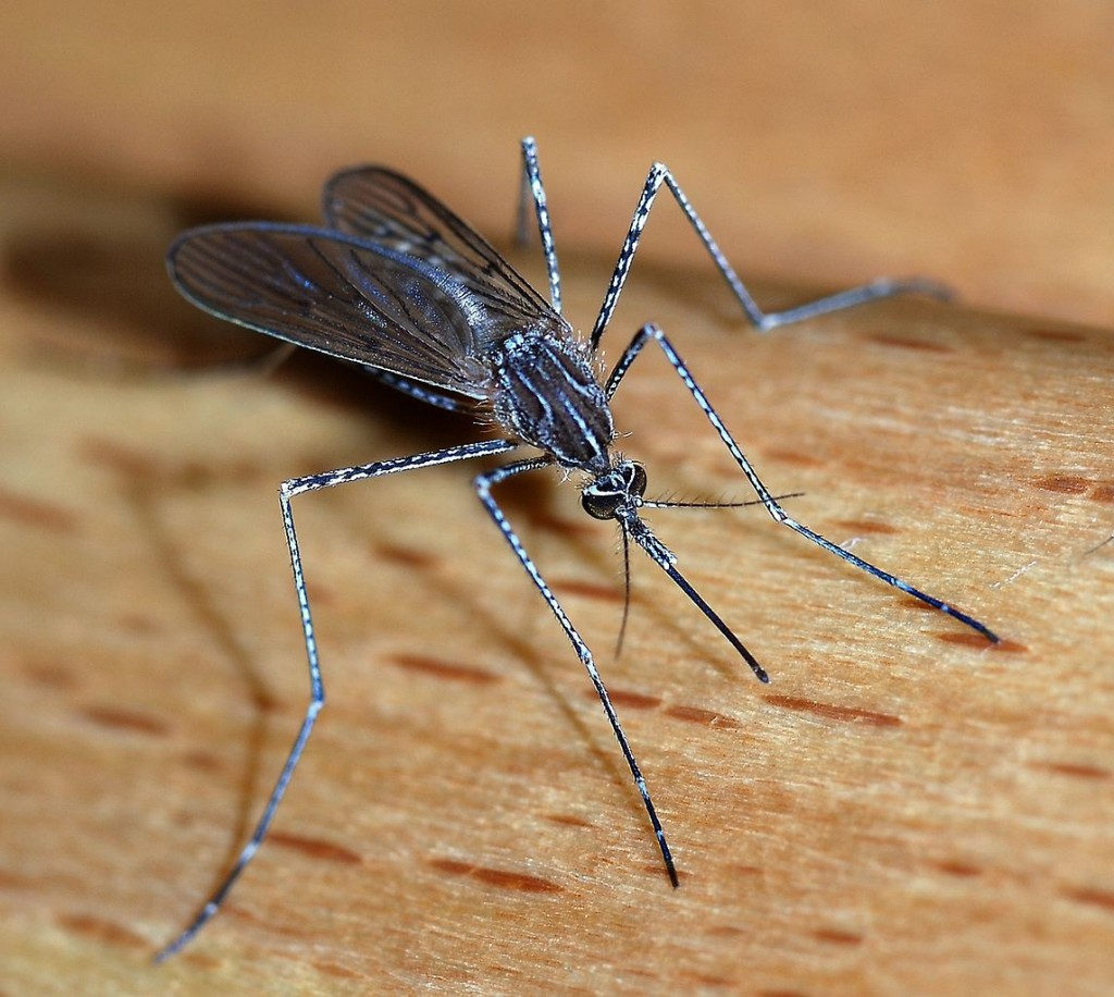 Mosquitos - at least two millions death annualy