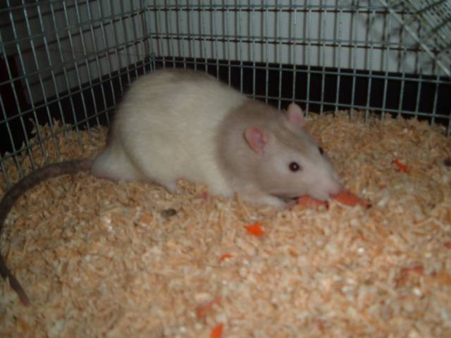 Rats - excellent in problem solving ans mazes