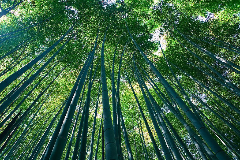10 Most Beautiful Forests In The World: Sagano Bamboo Forest (source: wiki)