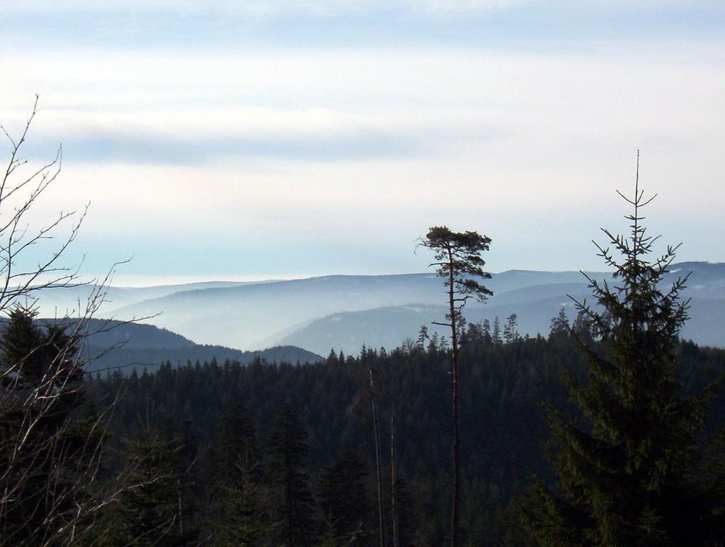 Dünyadaki En Güzel 10 Orman: Kara Orman, Almanya