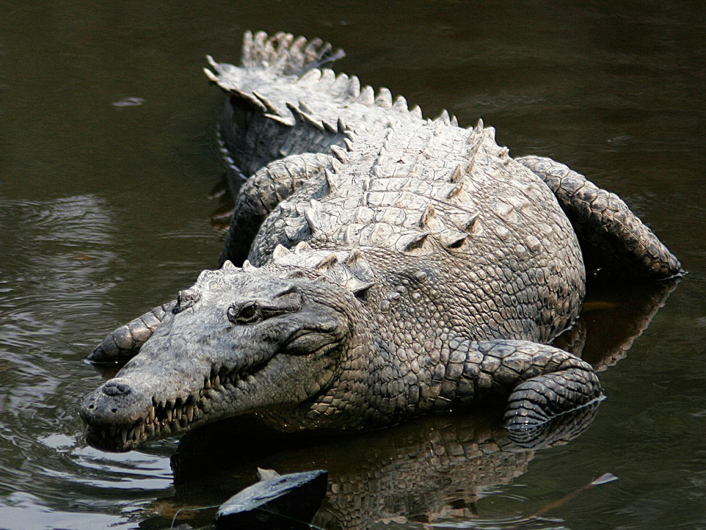 10 Most Dangerous Animals In The World: Crocodiles