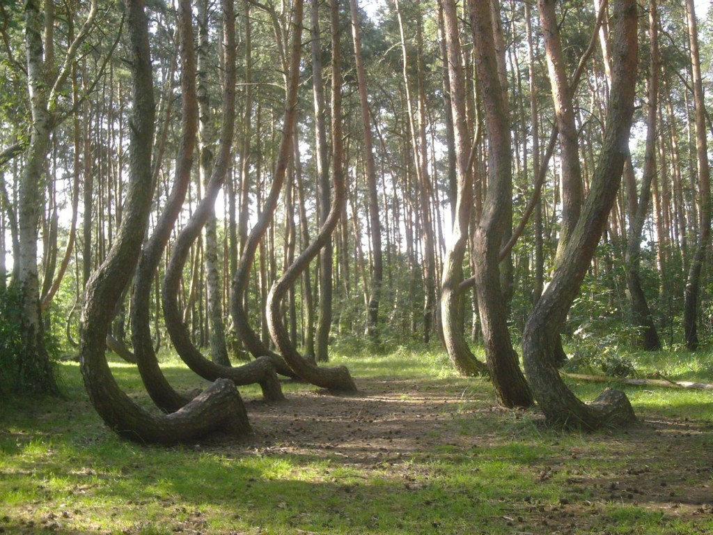 Crooked Forest, Poland - probably a result of human interference