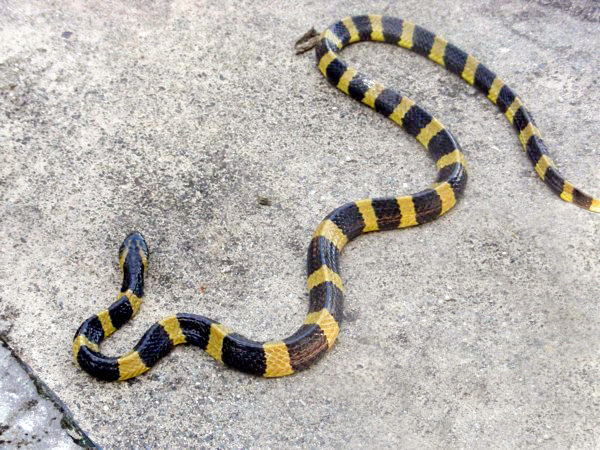 snakes - 250 species are capable of killing a person