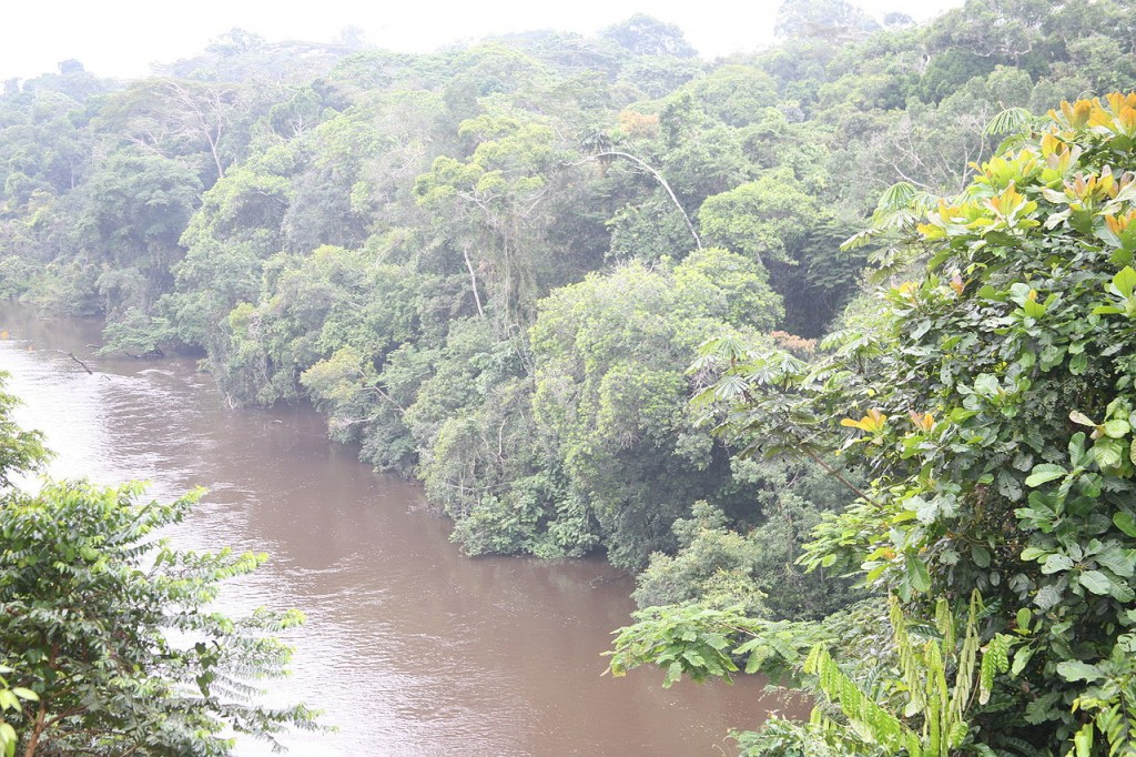 Raiforests in Congo