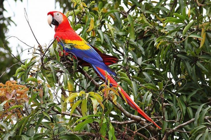 Coolest Parrots