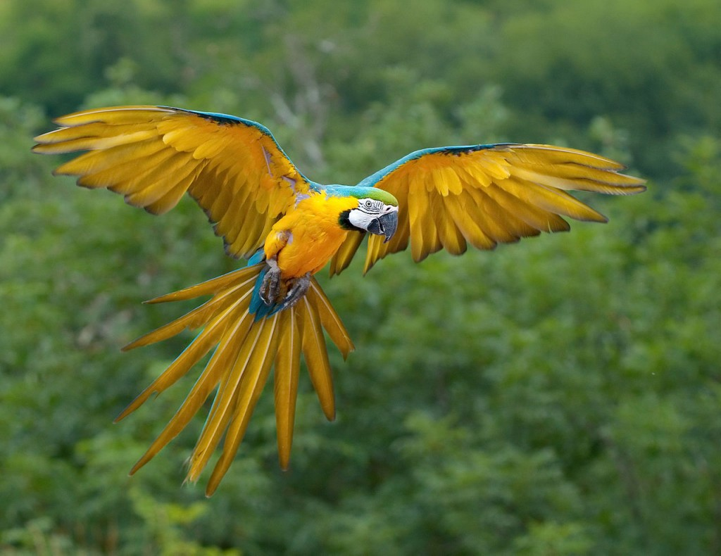 Coolest Parrots In The World: Blue and Yellow Macaw