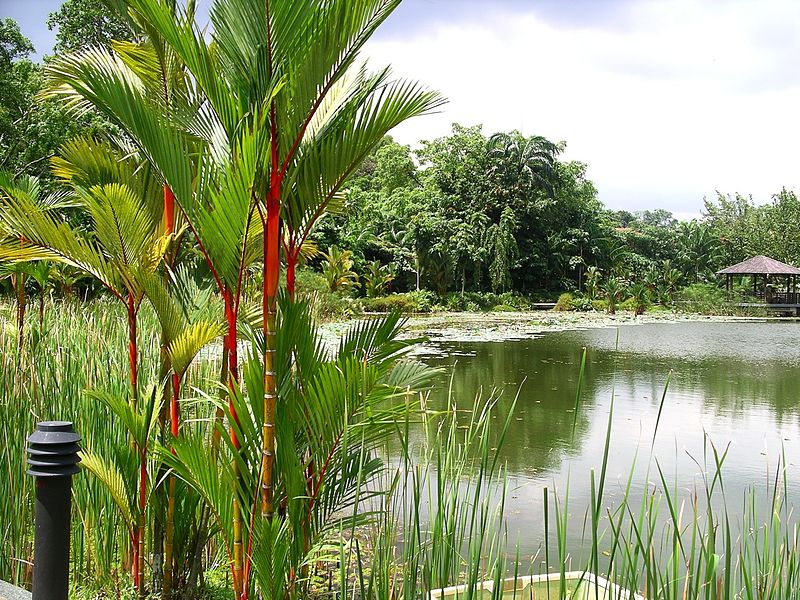 Best Botanical Gardens: Singapore Botanic Garden, Singapore
