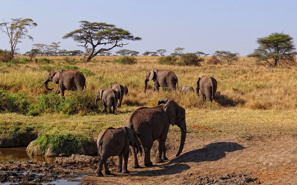 Amazing Natural World Heritage Sites: Serengeti National Park, Tanzania