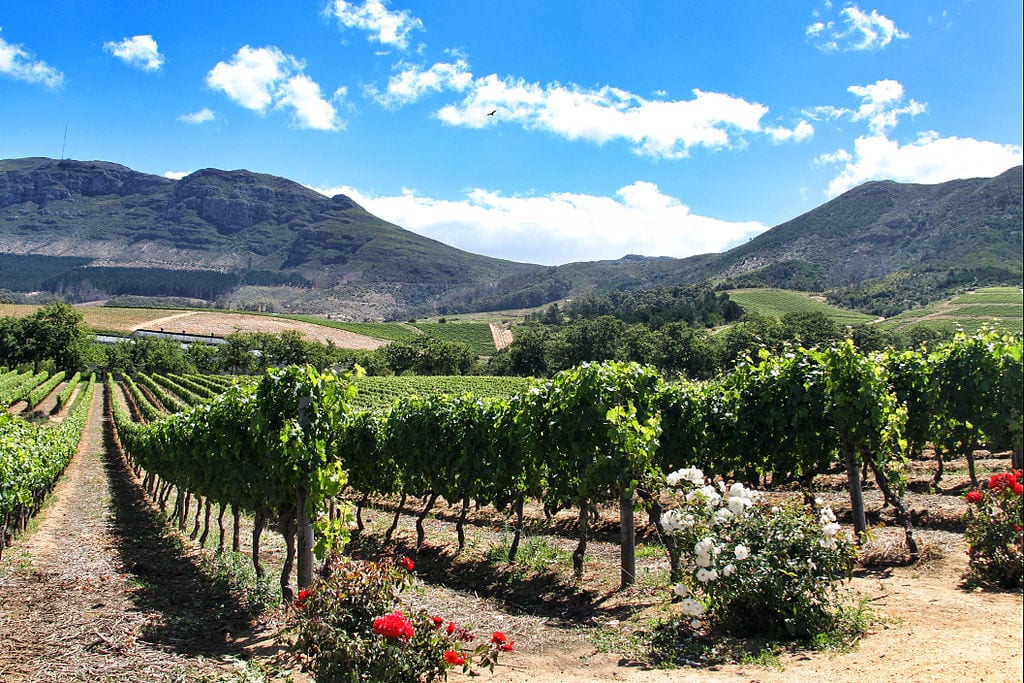 Best Wine Tours Destinations In The World: Constantia Valley, South Africa
