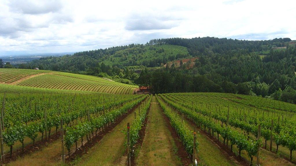 Best Wine Tours Destinations In The World: Willamette Valley, Oregon