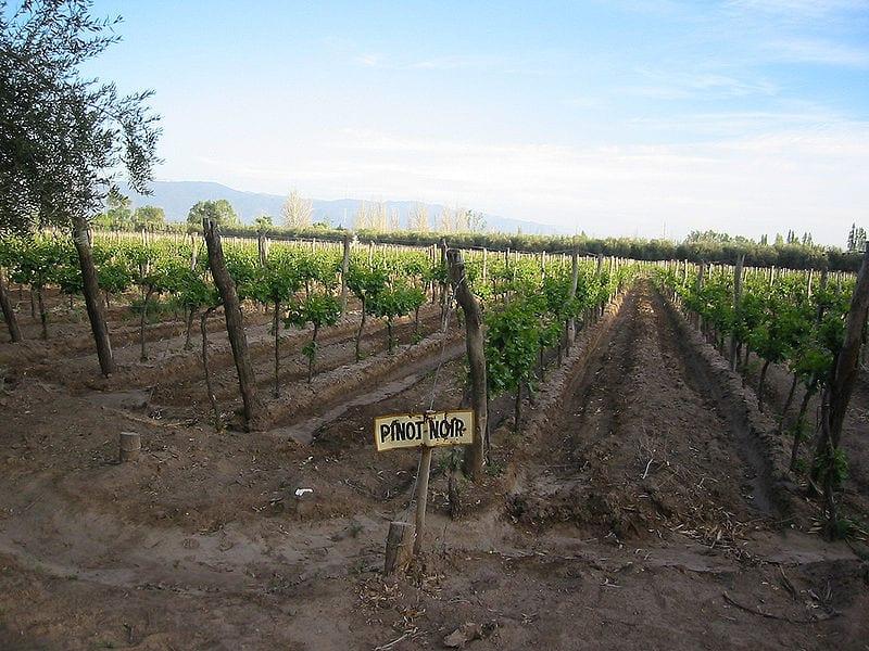 Best Wine Tours Destinations In The World: Mendoza, Argentina