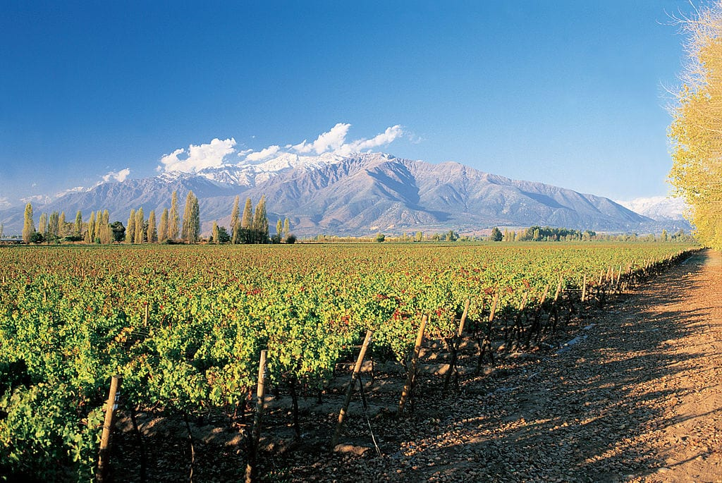 Best Wine Tours Destinations In The World: Chile Wine Country