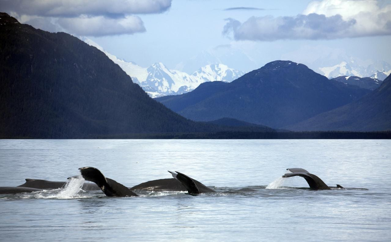 Whales in Glacier Bay National Park