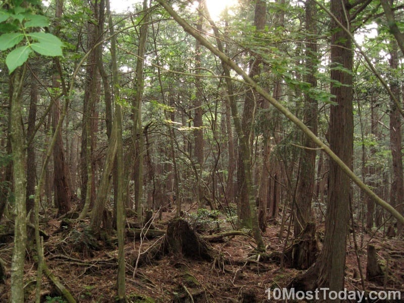 Creepiest Places In The World: Suicide Forest