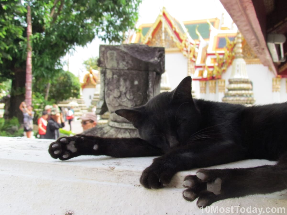 A cat taking a nap in Wat Arun temple, Bangkok, Thailand
