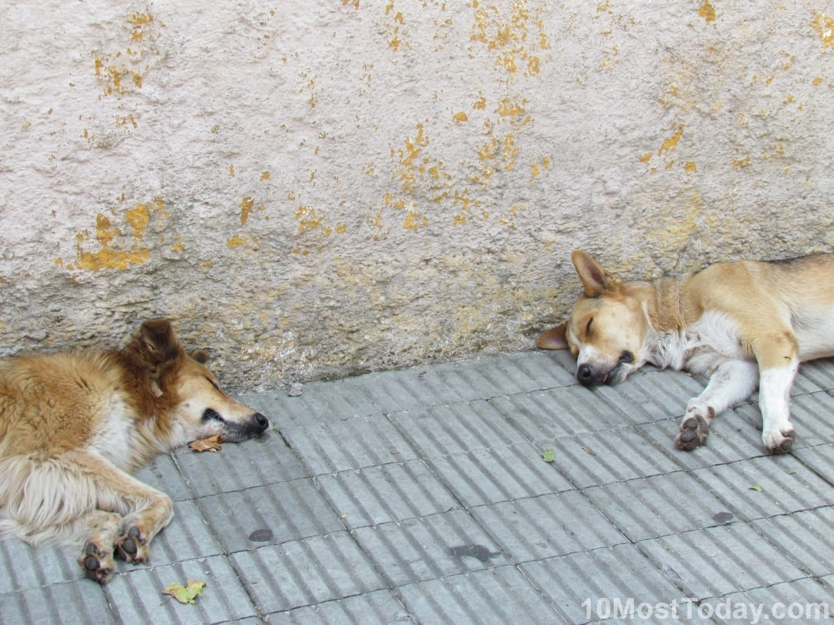 Dogs taking their Siesta, Colonia del Sacramento, Uruguay