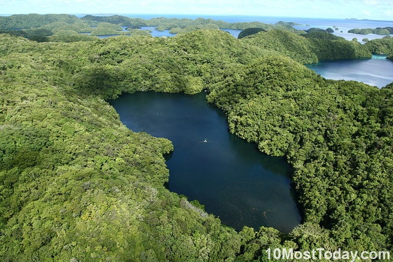 Most Unique Lakes In The World: Jellyfish Lake, Palau