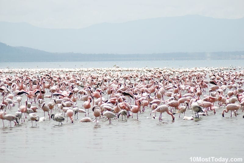 Most Unique Lakes In The World: Lake Nakuru, Kenya