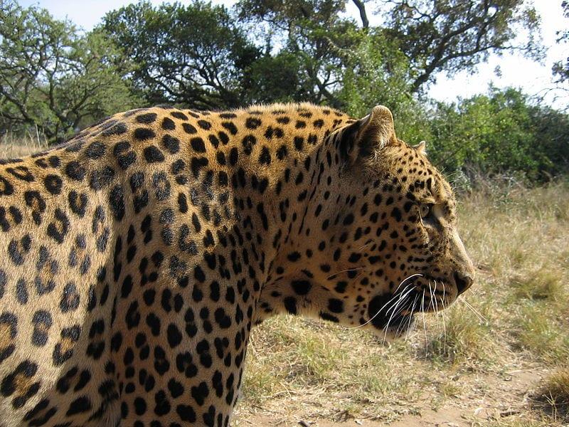 Most Famous Natural Landmarks In Africa: Kruger National Park, South Africa