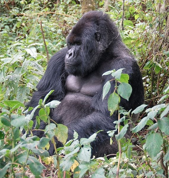 Most Famous Natural Landmarks In Africa: Virunga Mountains, East Africa