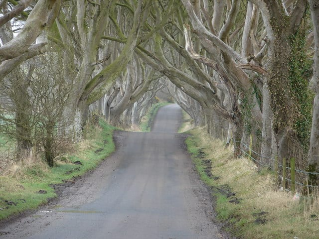 Game of Thrones Locations: The Dark Hedges, Northern Ireland (The road from King's Landing)