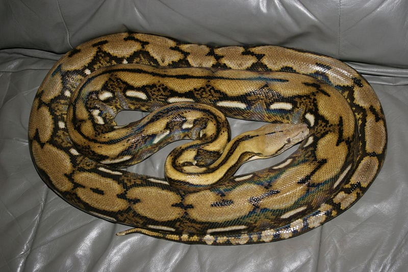 10 coolest snakes in the world 10 most today