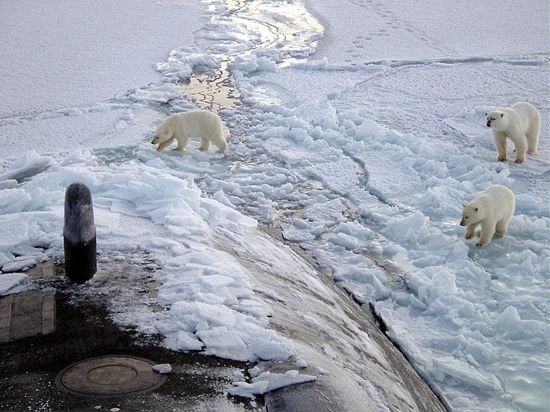 3 curious Polar bears approach a US submarine near the North Pole