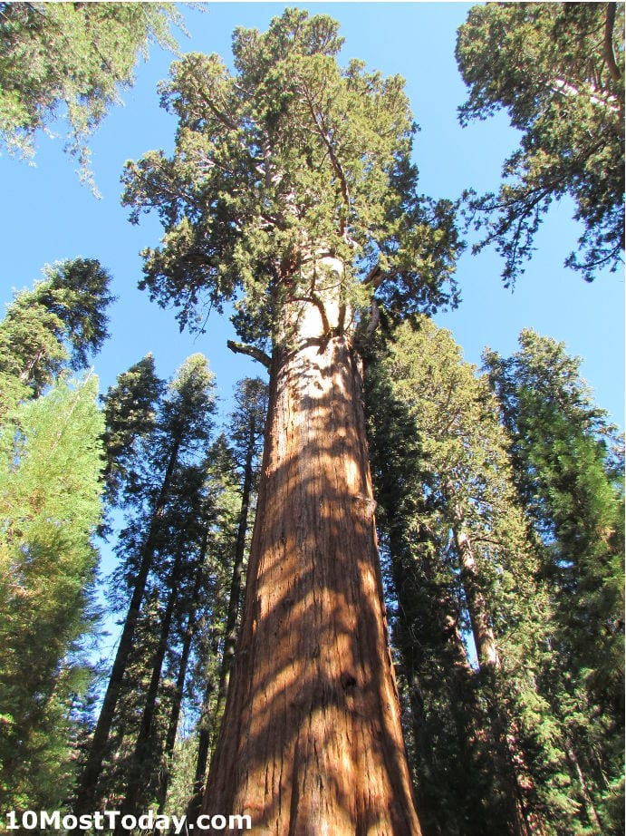 Best Attractions In California: General Sherman tree, Sequoia National Park