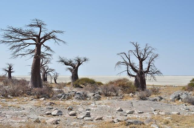 Most Amazing Salt Flats: Makgadikgadi Pan, Botswana