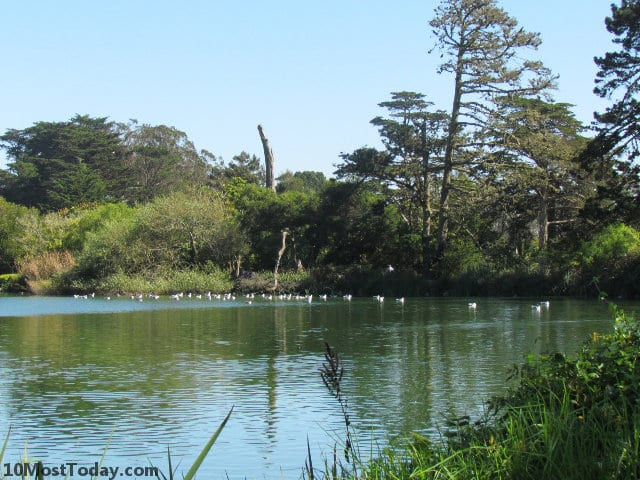 Best Attractions In San Francisco: Golden Gate Park