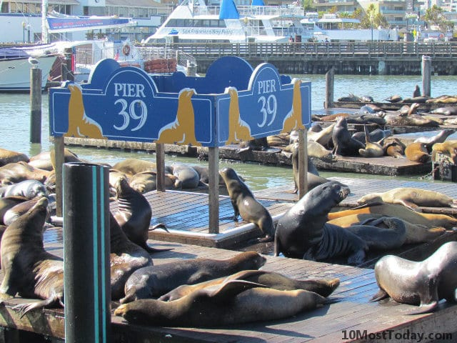 Best Attractions In San Francisco: The Sea Lions colony at Pier 39