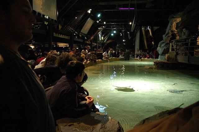 Best Aquariums In The World: Aquarium of Genoa