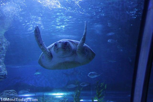 Best Aquariums In The World: Aquarium of Western Australia