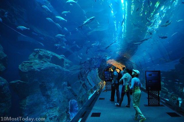 Best Aquariums In The World: Dubai Mall Aquarium
