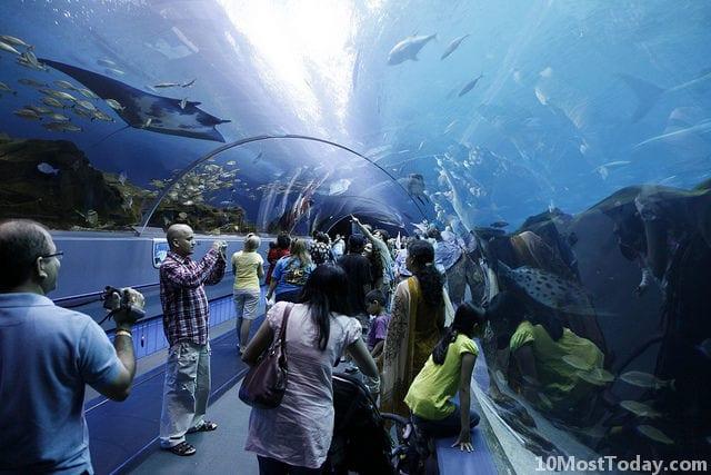 Best Aquariums In The World: Georgia Aquarium, Atlanta