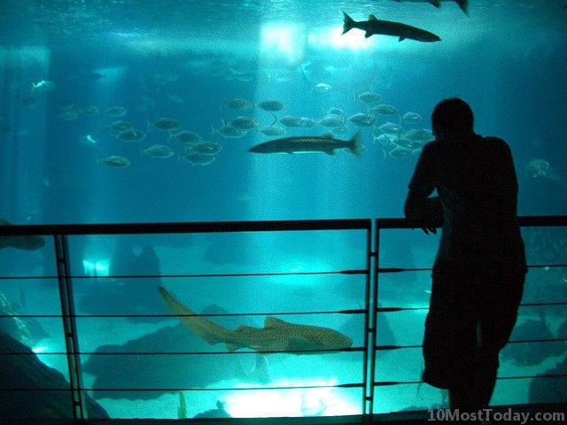 Best Aquariums In The World: Lisbon Oceanarium