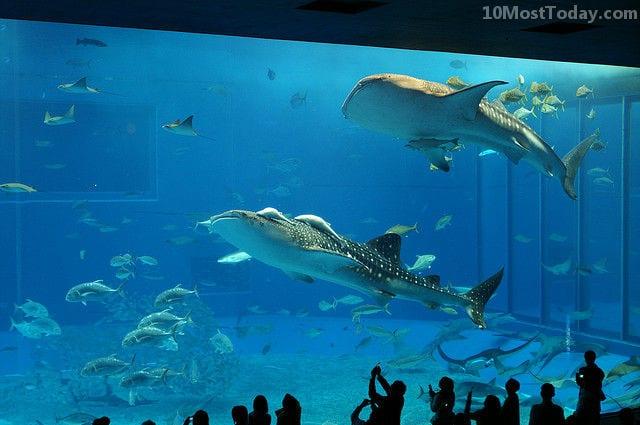 Best Aquariums In The World: Okinawa Churaumi Aquarium