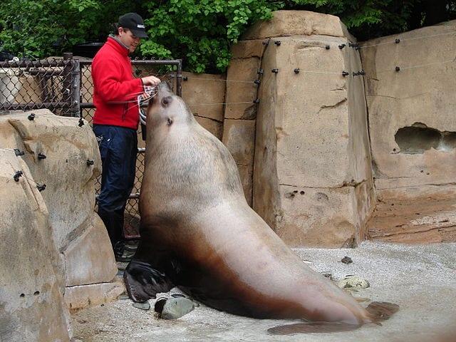 Best Aquariums In The World: Vancouver Aquarium