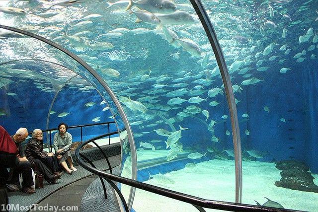 Best Aquariums In The World: Shanghai Ocean Aquarium