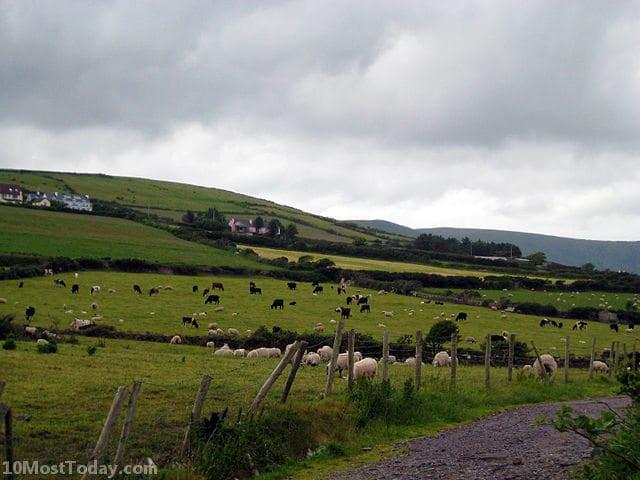 Best Attractions In Ireland: Dingle Peninsula