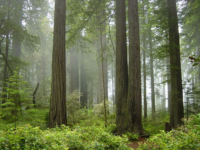 10 Best Attractions In California: Redwood National and State Parks