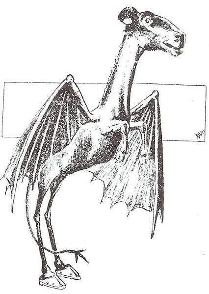 A drawing from of the Jersey Devil from the Philadelphia Bulletin, January 1909