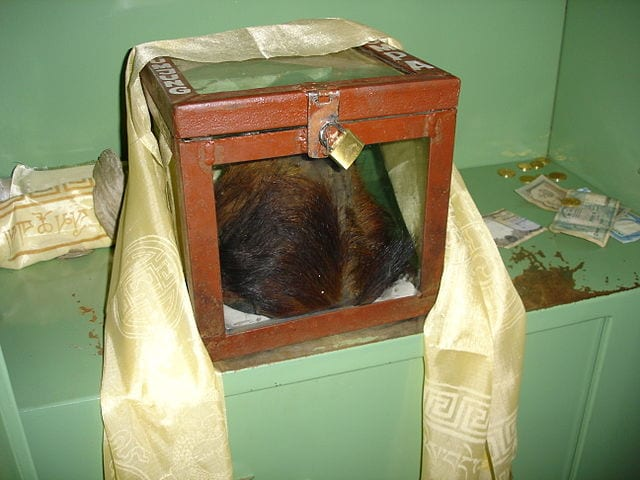An alleged Yeti scalp in Khumjung monastery - which was proven to be fake