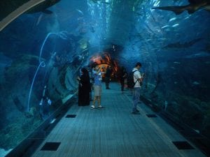Must-Visit Attractions in Dubai
