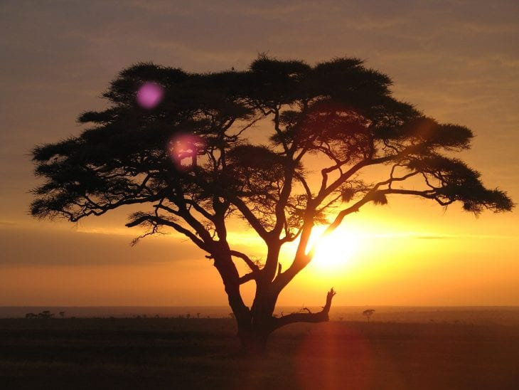 Safari Experiences in the World