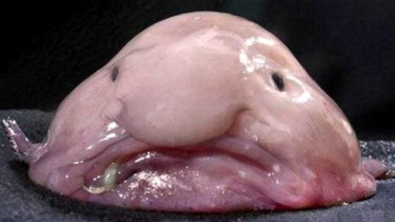 Scariest Looking Fish