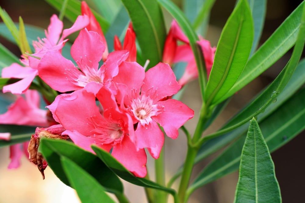 most poisonous plants