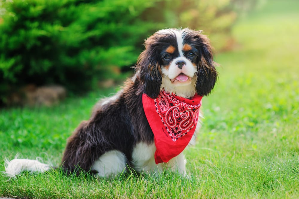 Most Popular Breeds of Family Dogs
